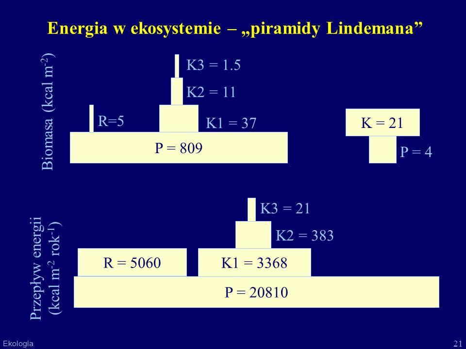"Energia w ekosystemie – ""piramidy Lindemana"