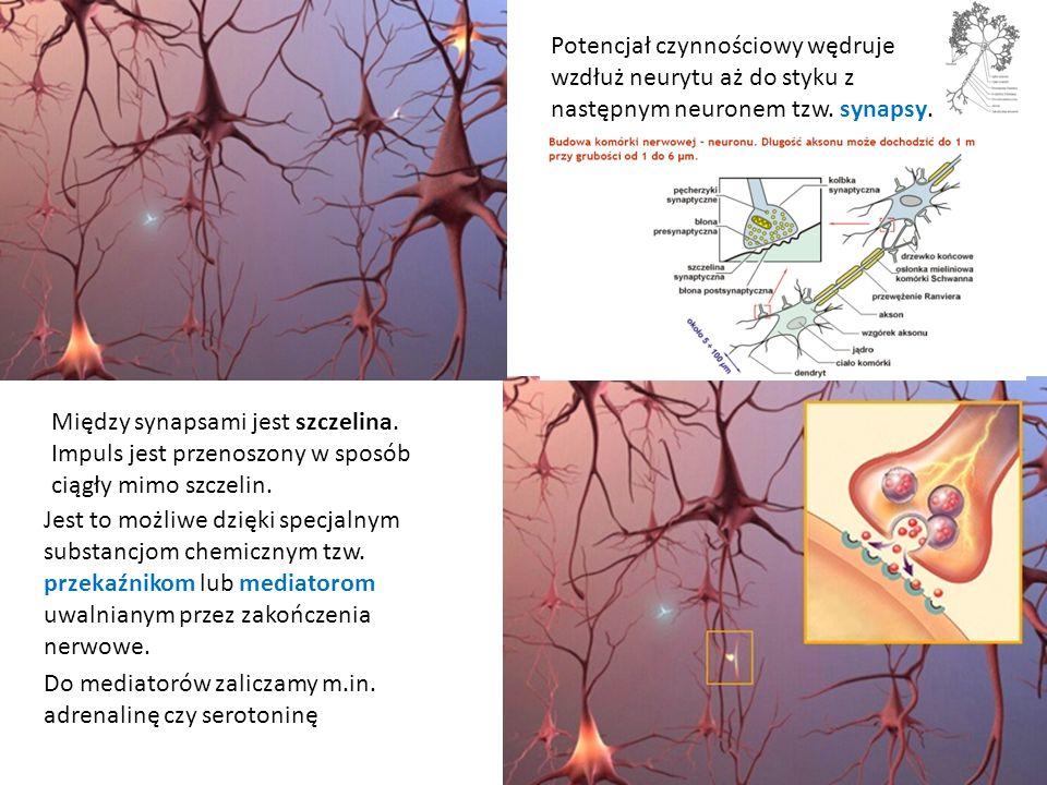 Do mediatorów zaliczamy m.in. adrenalinę czy serotoninę