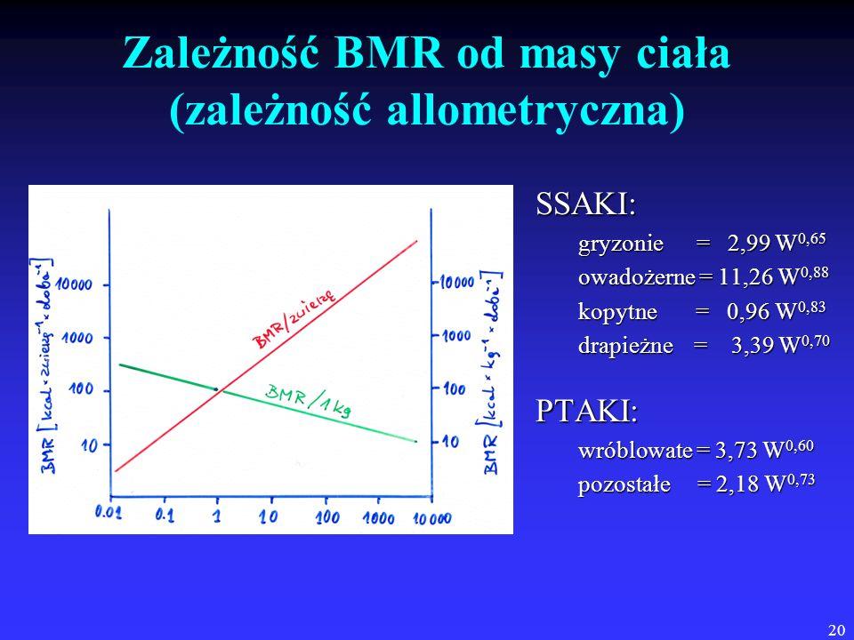 Zależność BMR od masy ciała (zależność allometryczna)