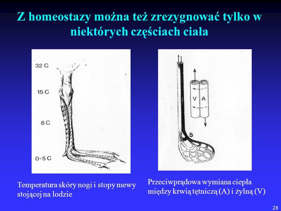 Z homeostazy można też zrezygnować tylko w niektórych częściach ciała