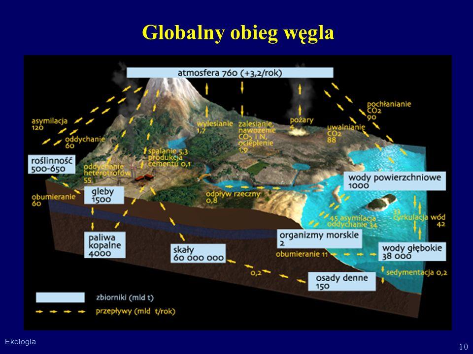 Globalny obieg węgla