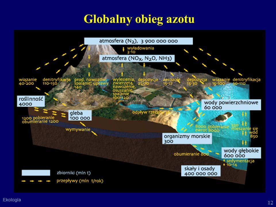 Globalny obieg azotu