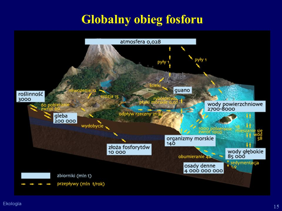 Globalny obieg fosforu