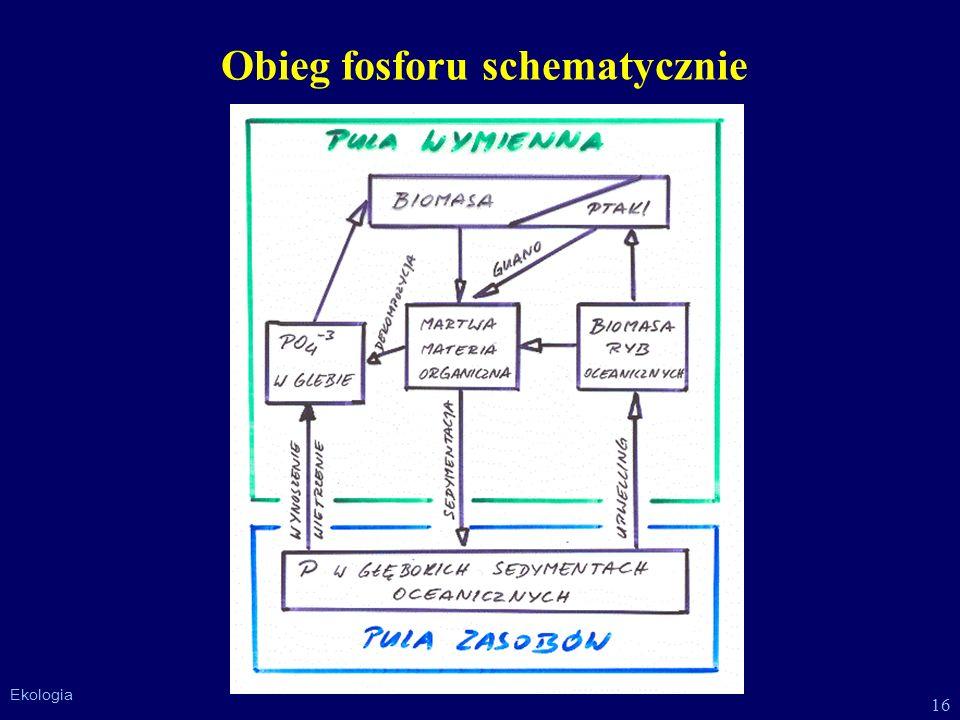 Obieg fosforu schematycznie