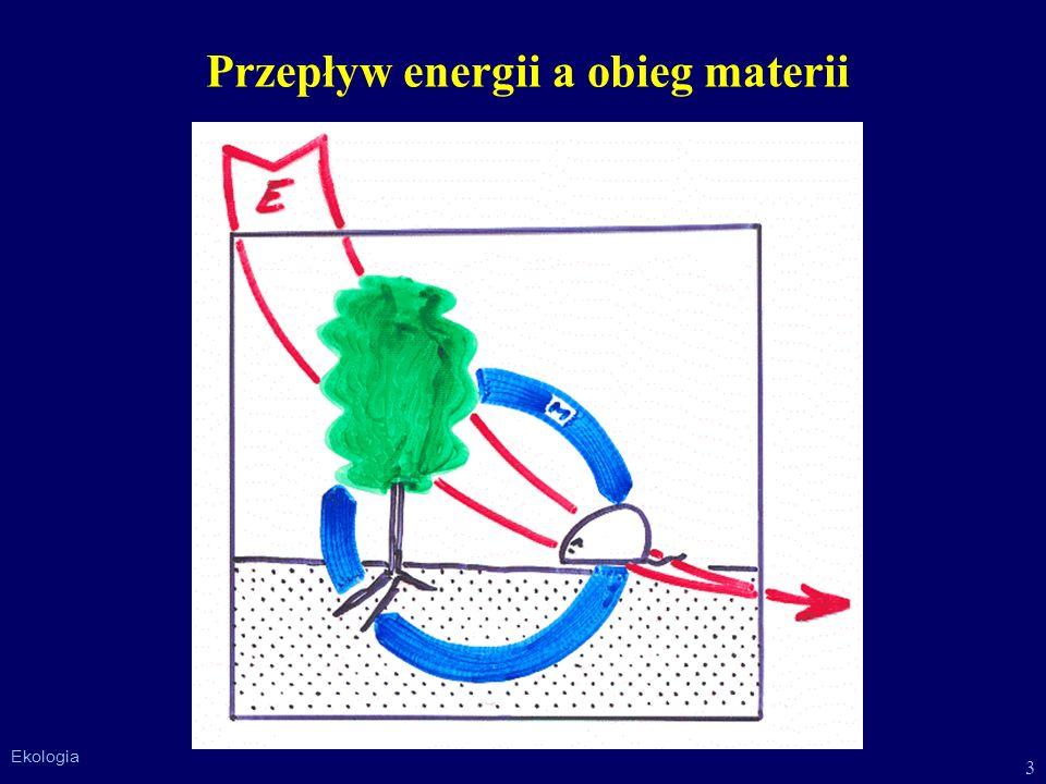 Przepływ energii a obieg materii