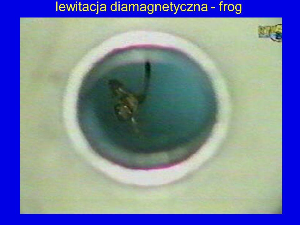 lewitacja diamagnetyczna - frog