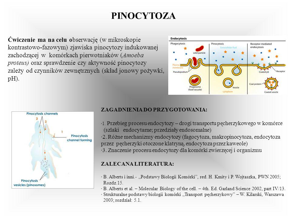 PINOCYTOZA Ćwiczenie ma na celu obserwację (w mikroskopie