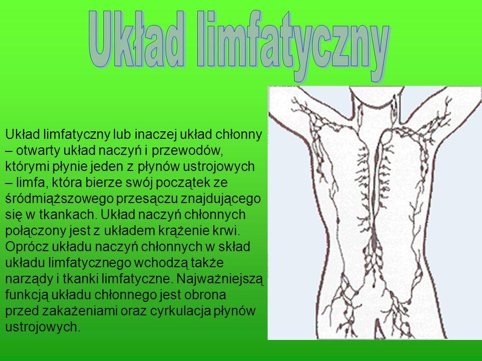 Układ limfatyczny