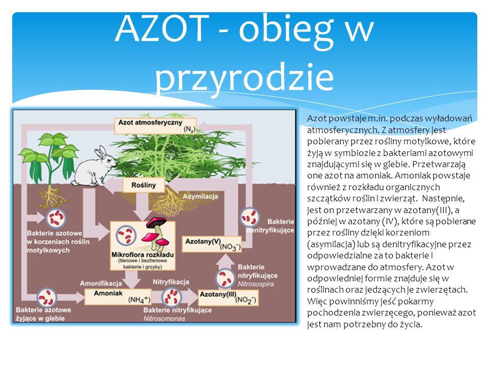 AZOT - obieg w przyrodzie