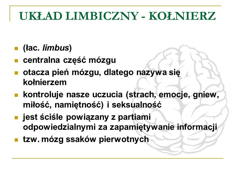 UKŁAD LIMBICZNY - KOŁNIERZ