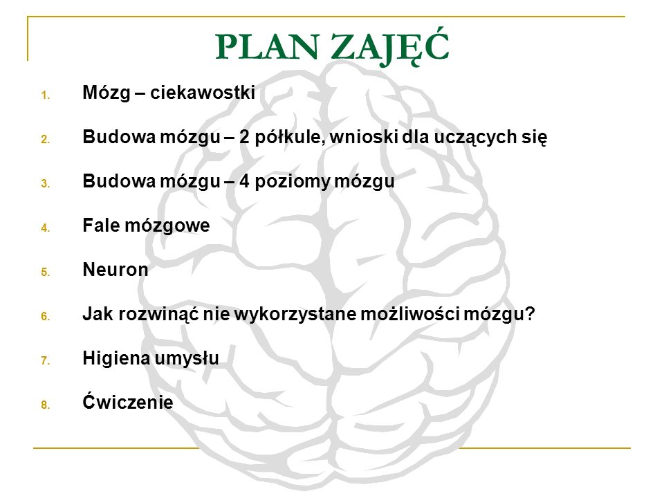 PLAN ZAJĘĆ Mózg – ciekawostki