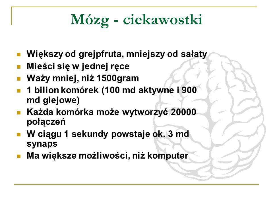 Mózg - ciekawostki Większy od grejpfruta, mniejszy od sałaty