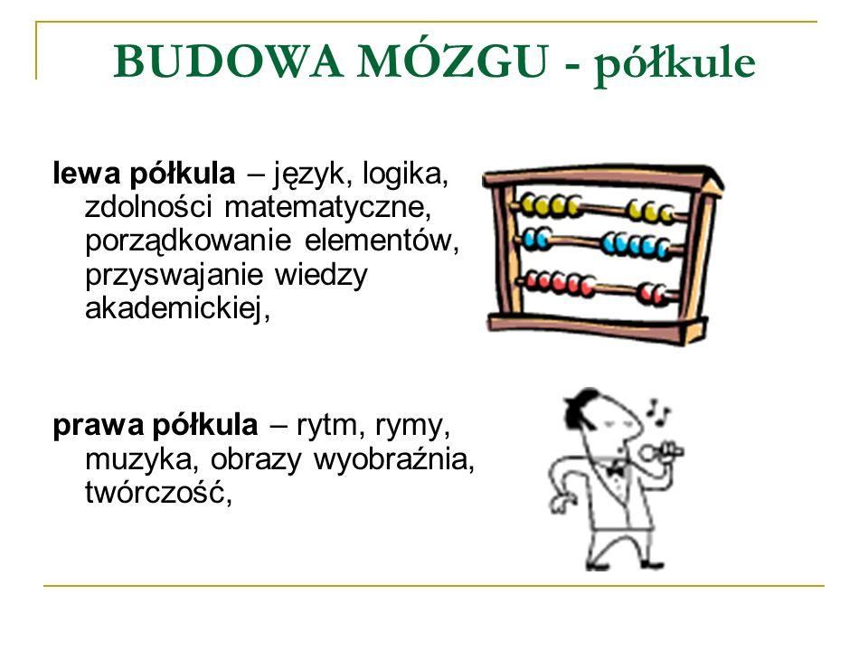 BUDOWA MÓZGU - półkule lewa półkula – język, logika, zdolności matematyczne, porządkowanie elementów, przyswajanie wiedzy akademickiej,