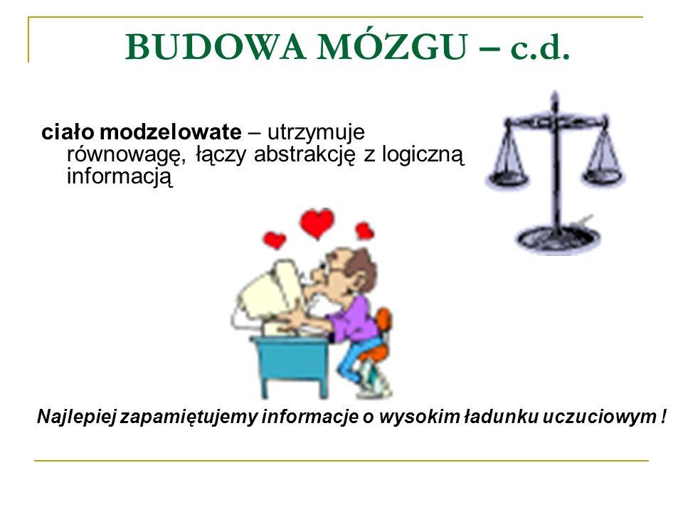 BUDOWA MÓZGU – c.d. ciało modzelowate – utrzymuje równowagę, łączy abstrakcję z logiczną informacją.