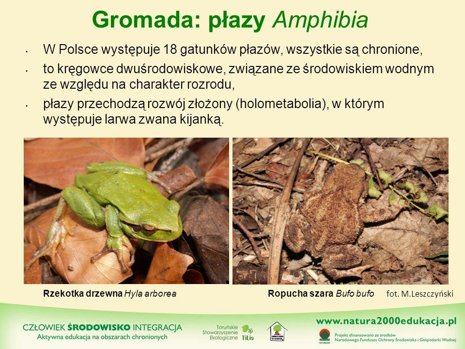 Gromada: płazy Amphibia