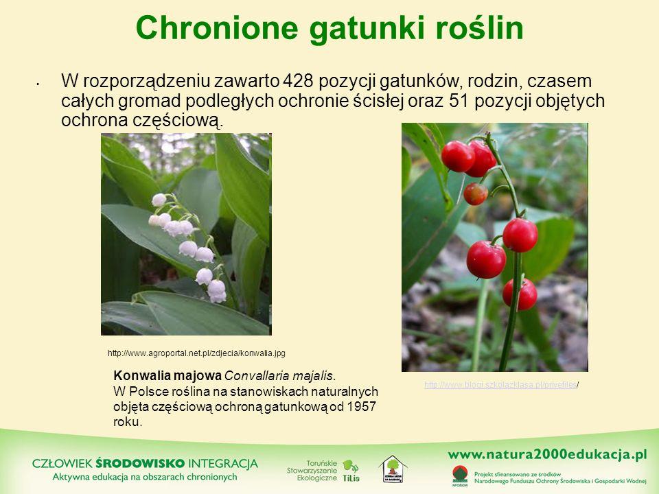 Chronione gatunki roślin