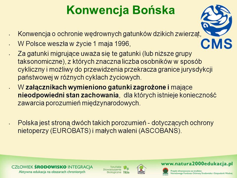 Konwencja Bońska Konwencja o ochronie wędrownych gatunków dzikich zwierząt, W Polsce weszła w życie 1 maja 1996,