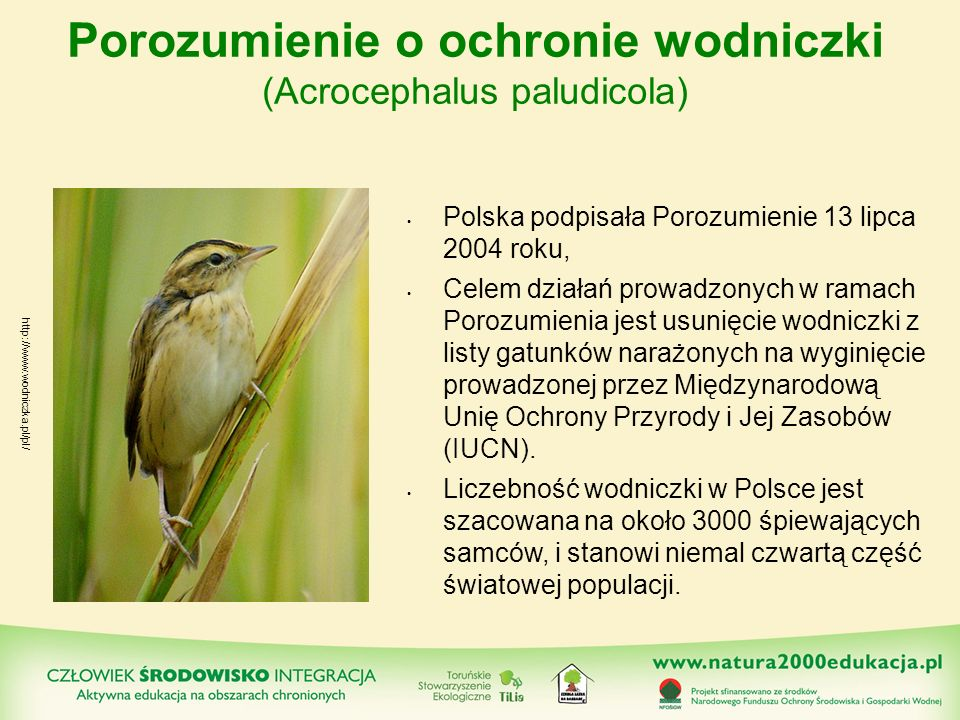 Porozumienie o ochronie wodniczki (Acrocephalus paludicola)