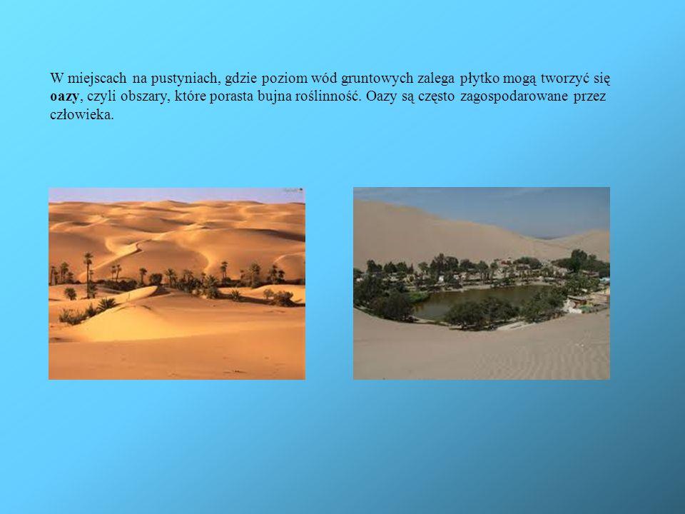 W miejscach na pustyniach, gdzie poziom wód gruntowych zalega płytko mogą tworzyć się oazy, czyli obszary, które porasta bujna roślinność.