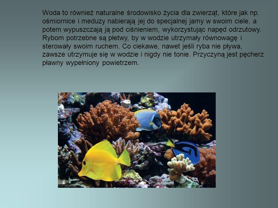 Woda to również naturalne środowisko życia dla zwierząt, które jak np