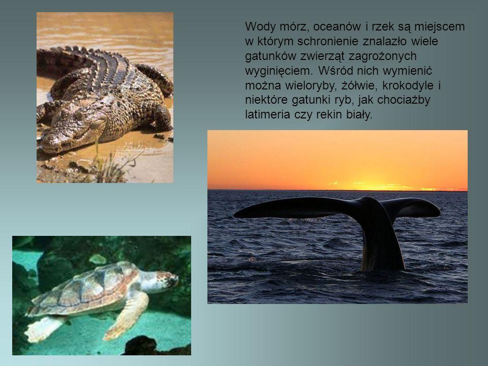 Wody mórz, oceanów i rzek są miejscem w którym schronienie znalazło wiele gatunków zwierząt zagrożonych wyginięciem.