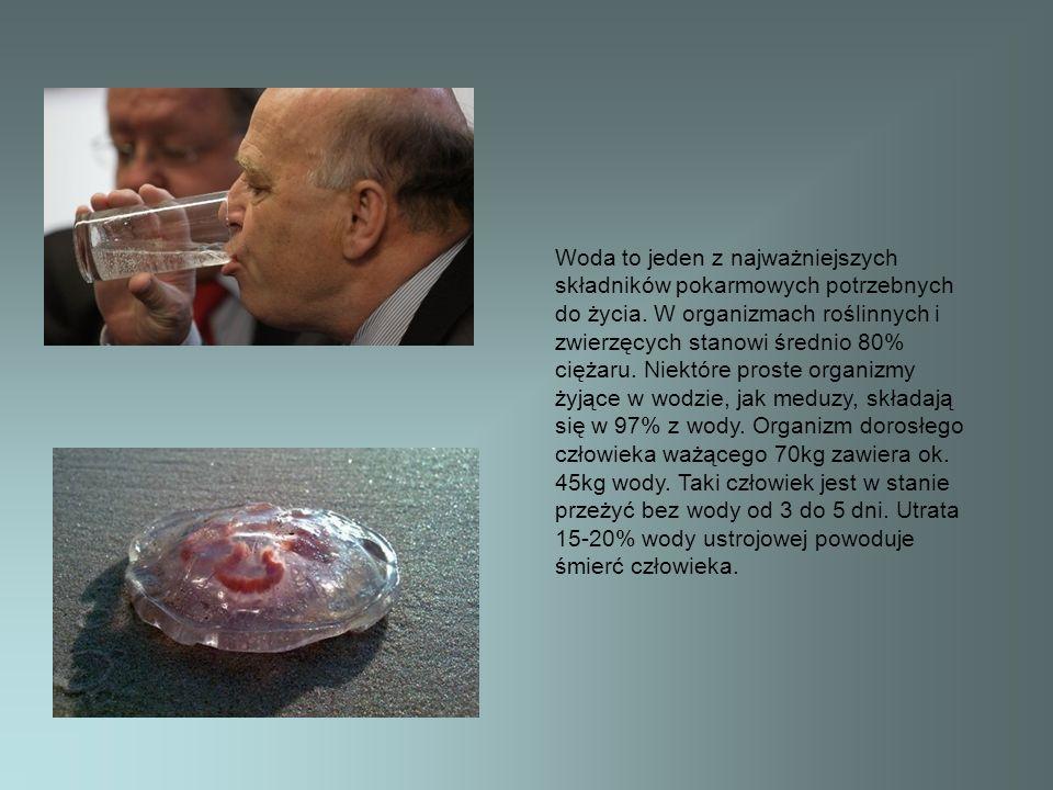 Woda to jeden z najważniejszych składników pokarmowych potrzebnych do życia.