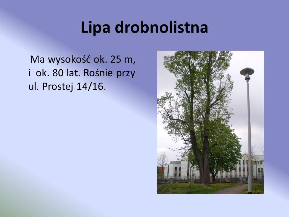 Lipa drobnolistna Ma wysokość ok. 25 m, i ok. 80 lat. Rośnie przy ul. Prostej 14/16.