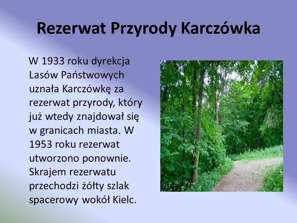 Rezerwat Przyrody Karczówka