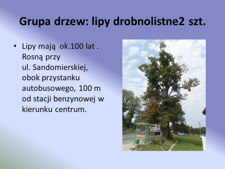 Grupa drzew: lipy drobnolistne2 szt.