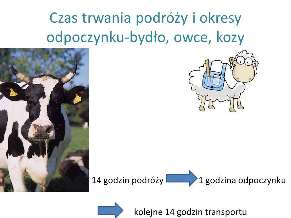 Czas trwania podróży i okresy odpoczynku-bydło, owce, kozy