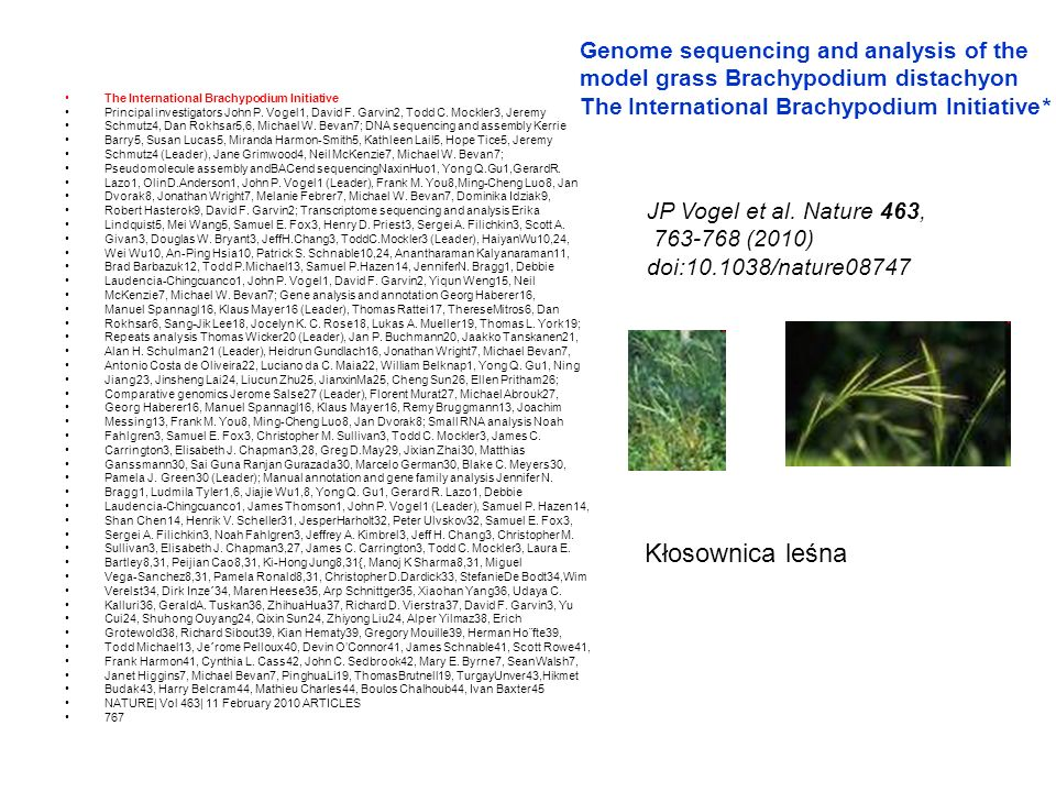 Genome sequencing and analysis of the model grass Brachypodium distachyon The International Brachypodium Initiative*