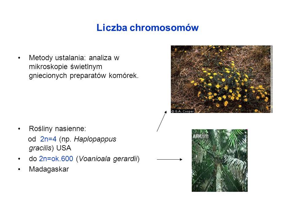Liczba chromosomów Metody ustalania: analiza w mikroskopie świetlnym gniecionych preparatów komórek.