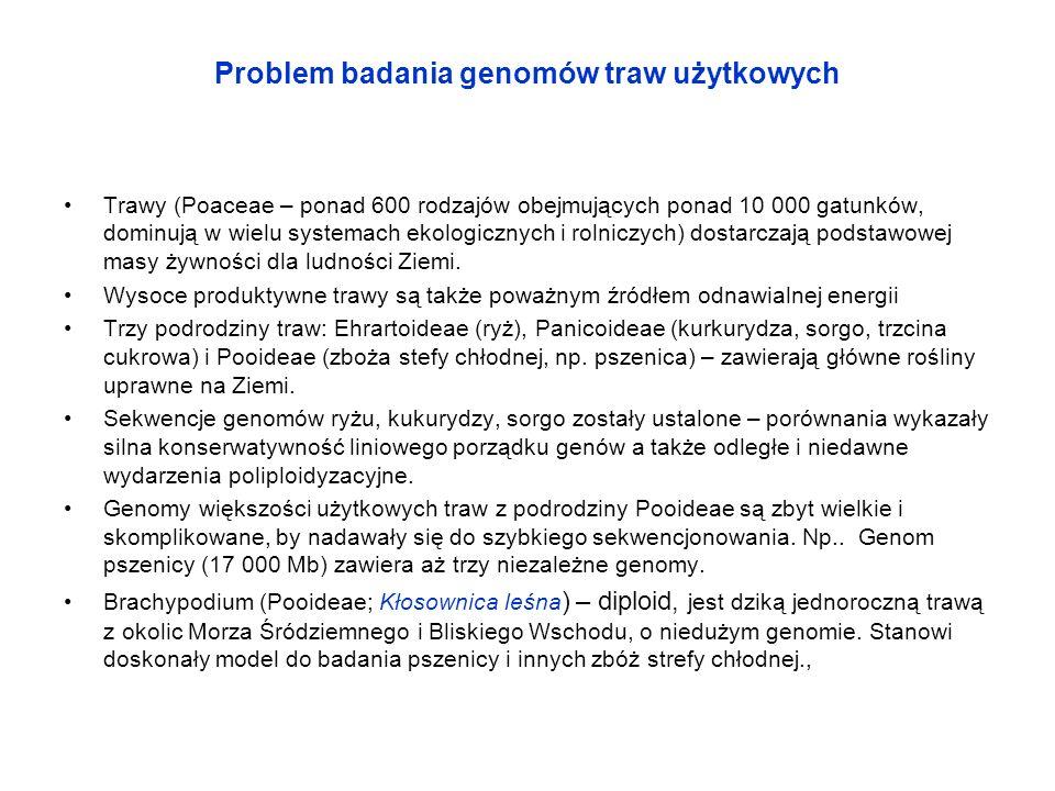 Problem badania genomów traw użytkowych