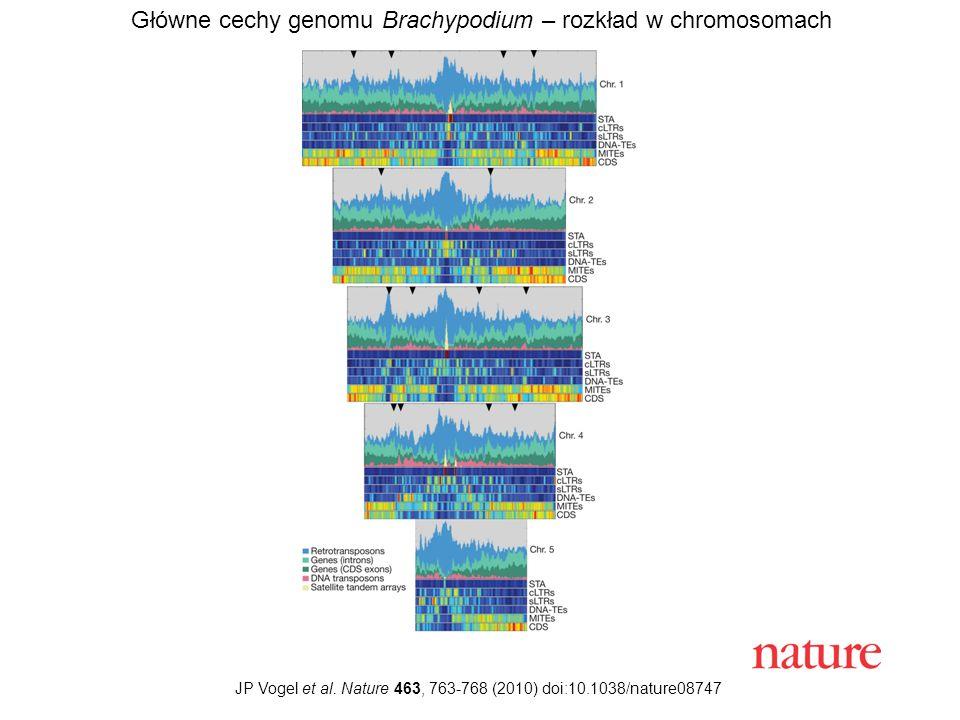 Główne cechy genomu Brachypodium – rozkład w chromosomach