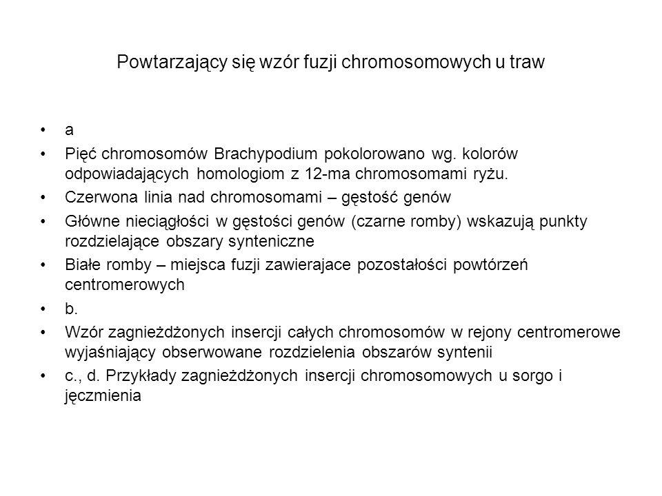 Powtarzający się wzór fuzji chromosomowych u traw