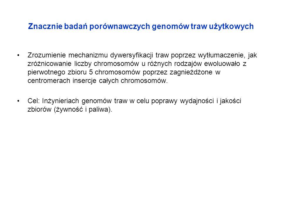 Znacznie badań porównawczych genomów traw użytkowych