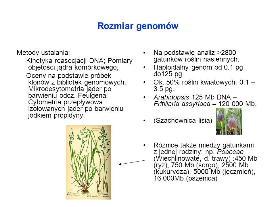 Rozmiar genomów Metody ustalania: