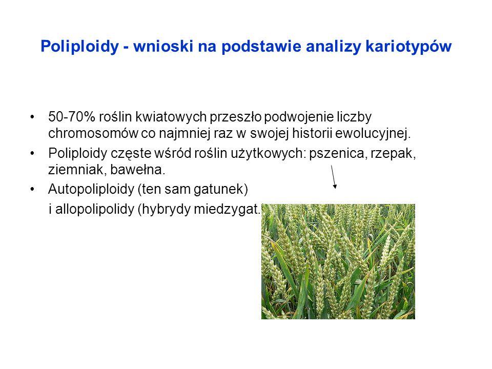 Poliploidy - wnioski na podstawie analizy kariotypów