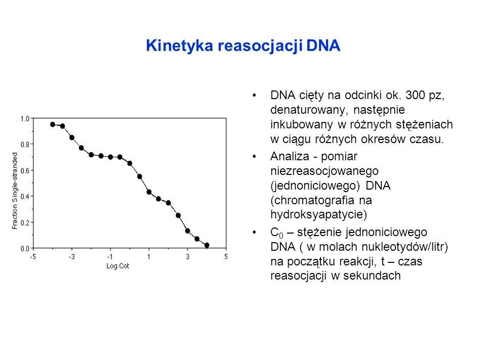 Kinetyka reasocjacji DNA