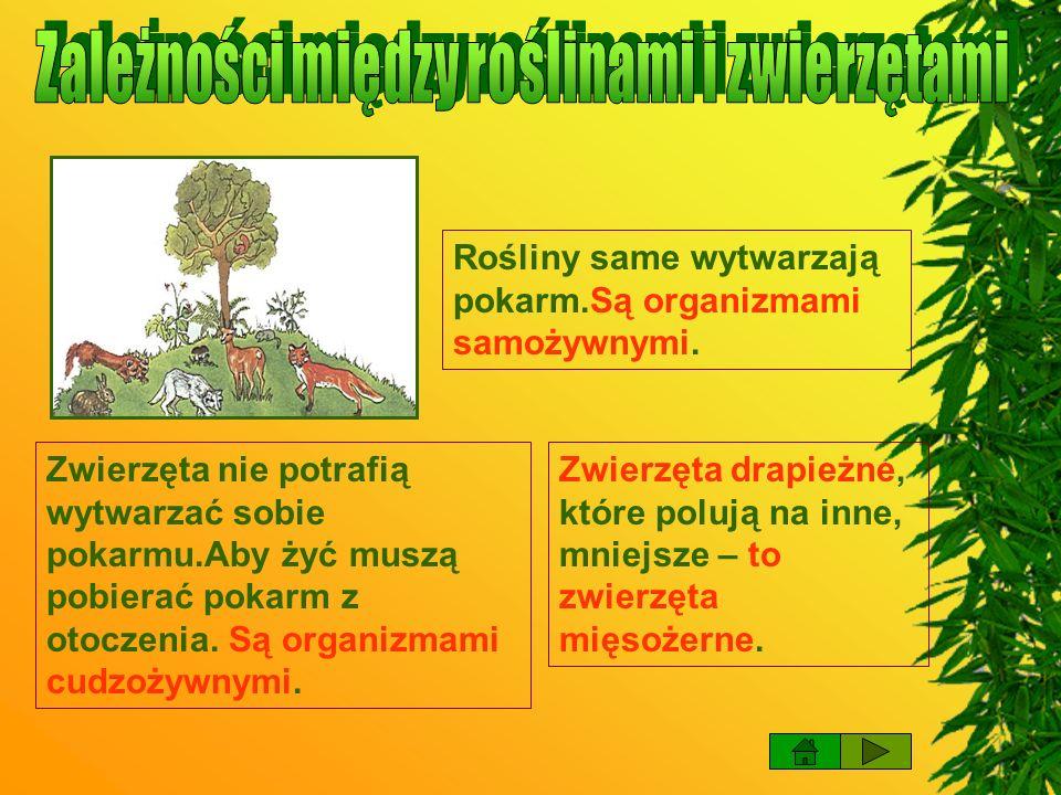 Zależności między roślinami i zwierzętami