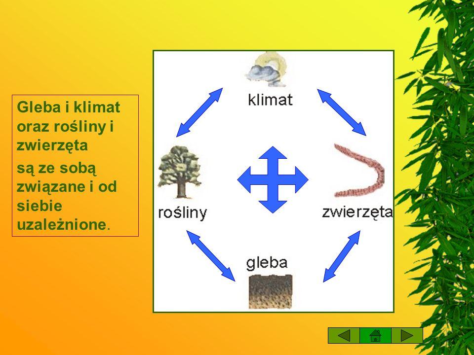 Gleba i klimat oraz rośliny i zwierzęta