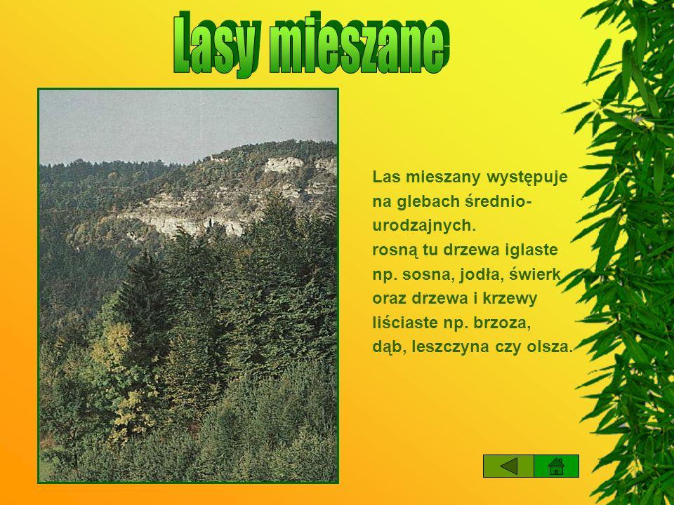 Lasy mieszane Las mieszany występuje na glebach średnio- urodzajnych.