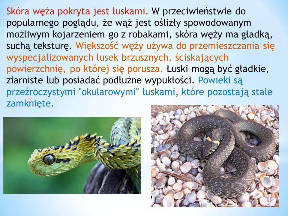 Skóra węża pokryta jest łuskami