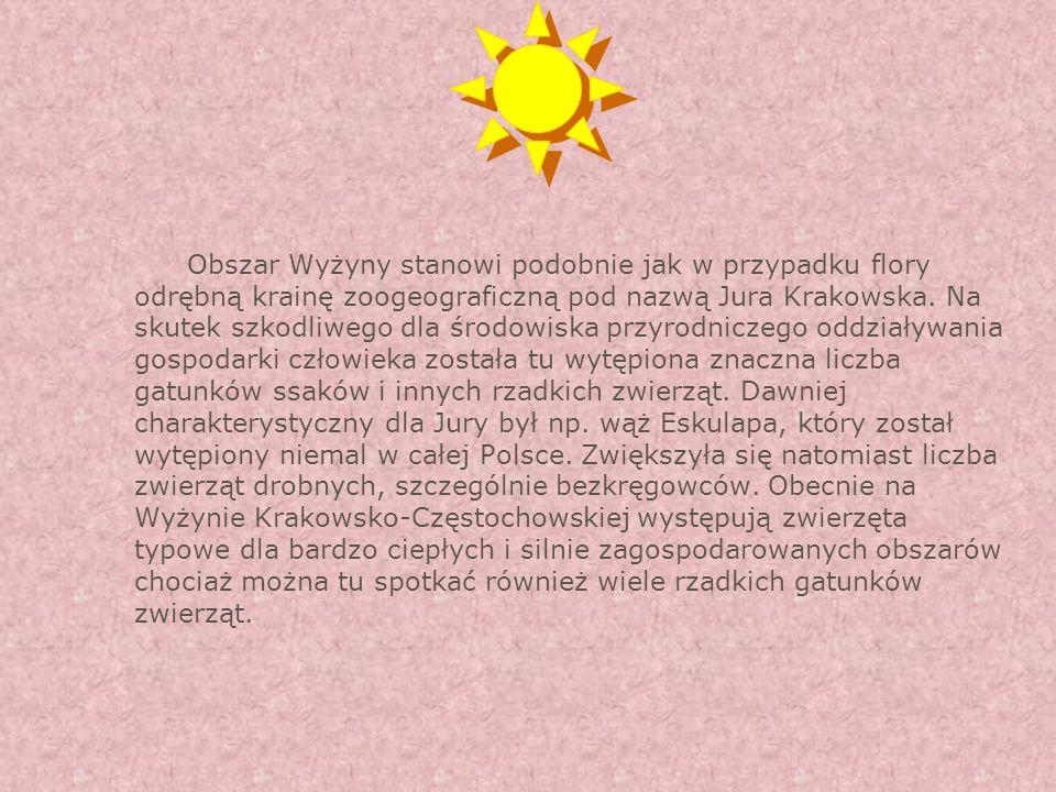 Obszar Wyżyny stanowi podobnie jak w przypadku flory odrębną krainę zoogeograficzną pod nazwą Jura Krakowska.