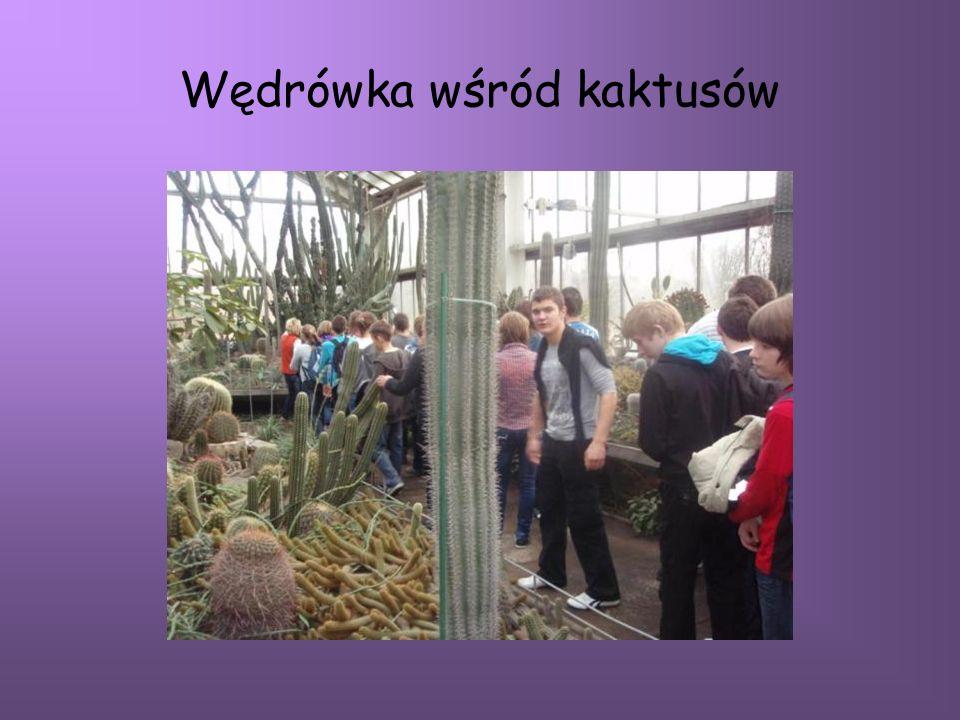 Wędrówka wśród kaktusów