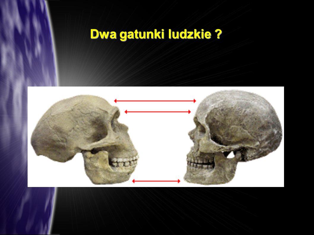Dwa gatunki ludzkie