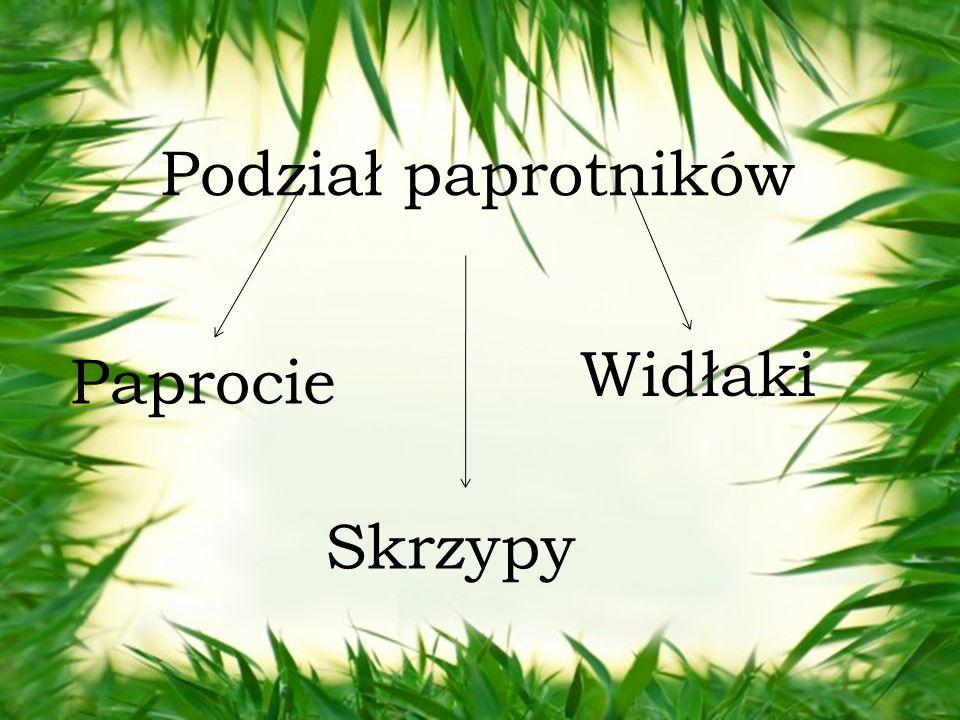 Podział paprotników Widłaki Paprocie Skrzypy