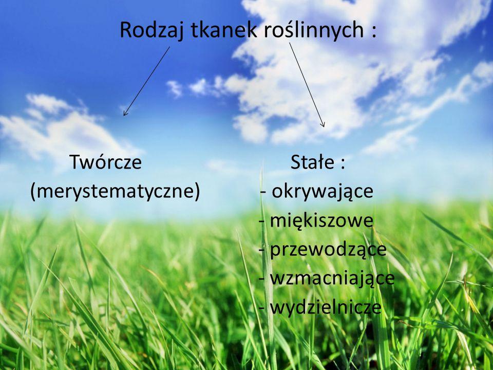 Rodzaj tkanek roślinnych :