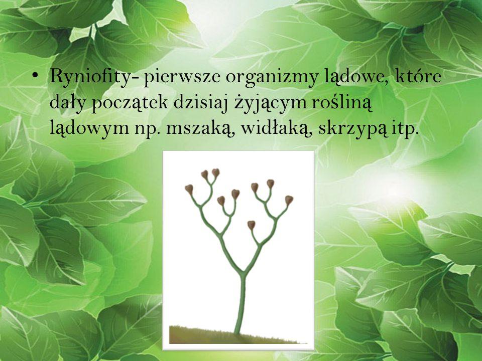 Ryniofity- pierwsze organizmy lądowe, które dały początek dzisiaj żyjącym rośliną lądowym np.