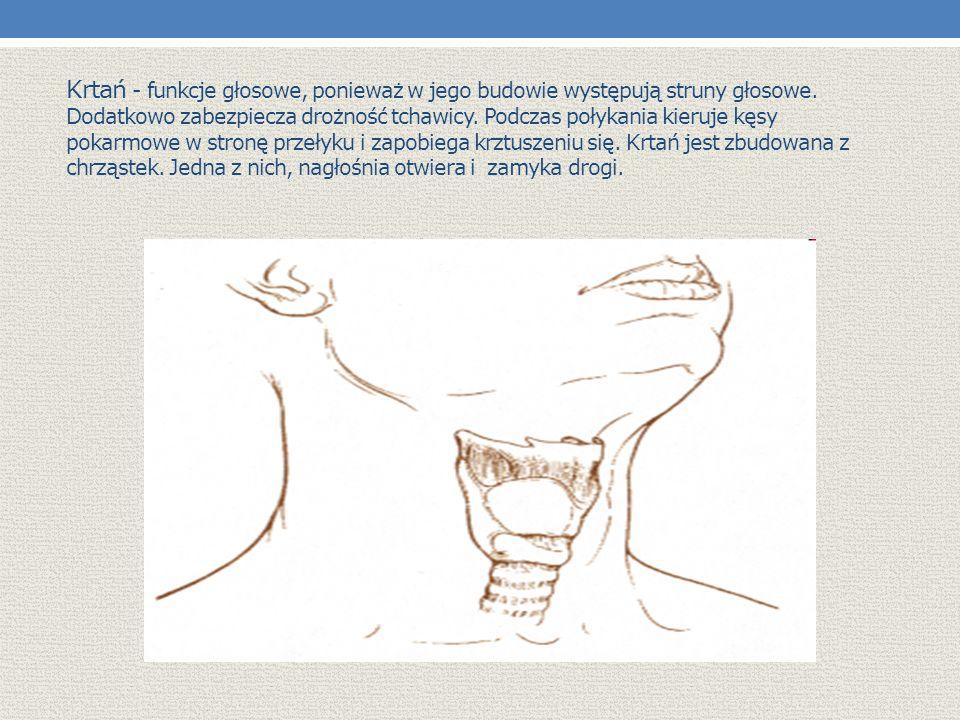 Krtań - funkcje głosowe, ponieważ w jego budowie występują struny głosowe.
